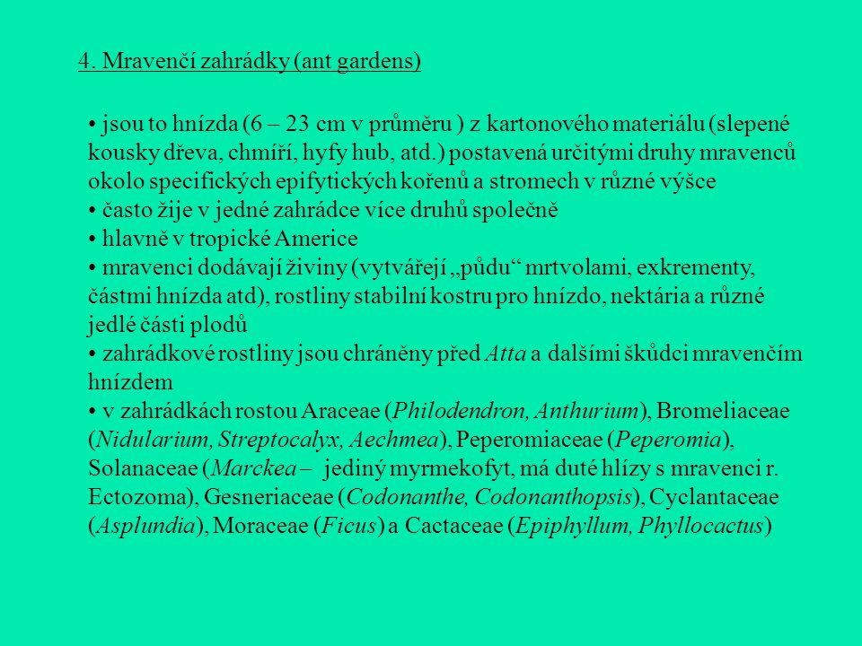 4. Mravenčí zahrádky (ant gardens)