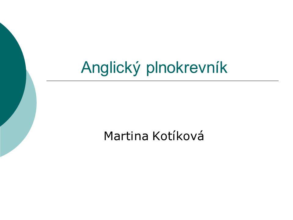 Anglický plnokrevník Martina Kotíková