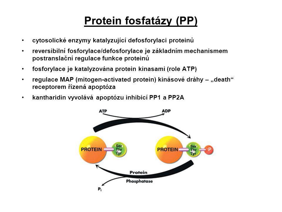 Protein fosfatázy (PP)