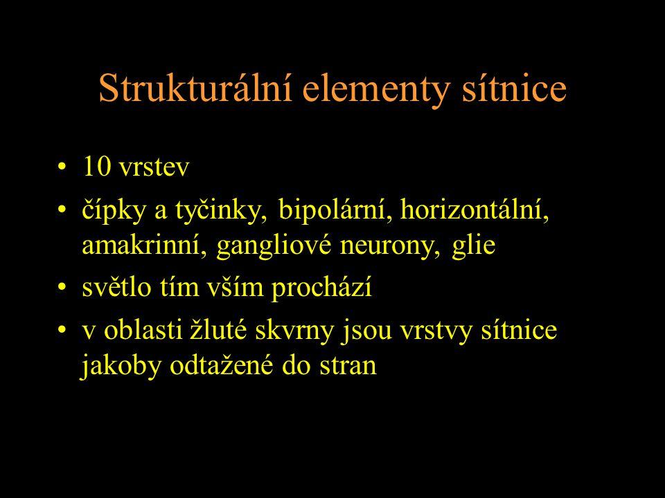 Strukturální elementy sítnice