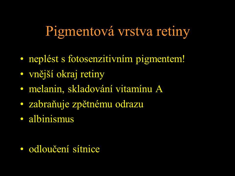 Pigmentová vrstva retiny