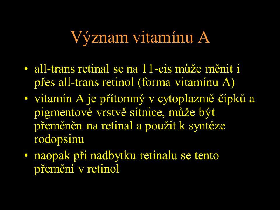 Význam vitamínu A all-trans retinal se na 11-cis může měnit i přes all-trans retinol (forma vitamínu A)
