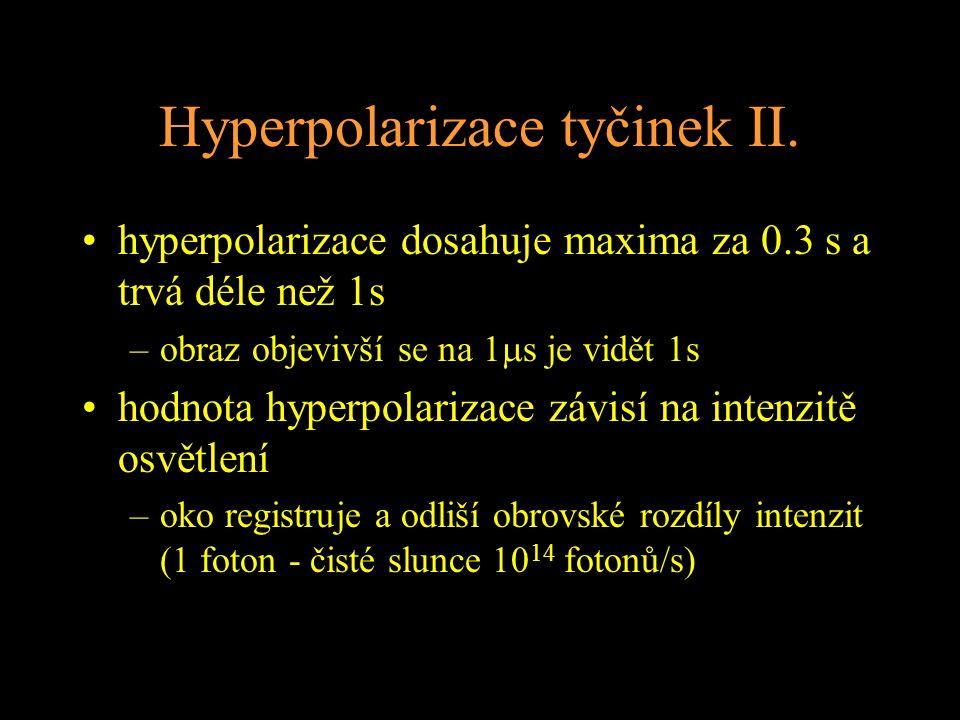 Hyperpolarizace tyčinek II.