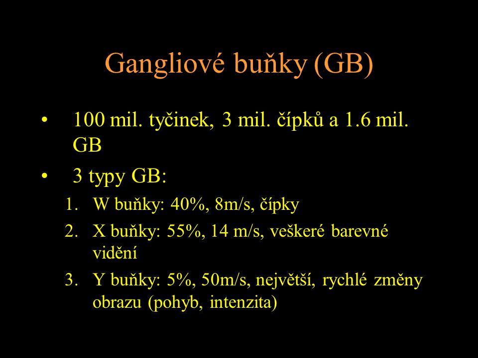 Gangliové buňky (GB) 100 mil. tyčinek, 3 mil. čípků a 1.6 mil. GB