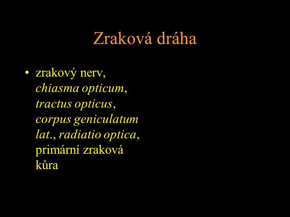 Zraková dráha zrakový nerv, chiasma opticum, tractus opticus, corpus geniculatum lat., radiatio optica, primární zraková kůra.
