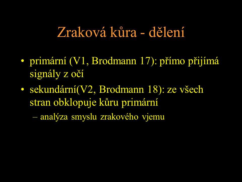 Zraková kůra - dělení primární (V1, Brodmann 17): přímo přijímá signály z očí. sekundární(V2, Brodmann 18): ze všech stran obklopuje kůru primární.
