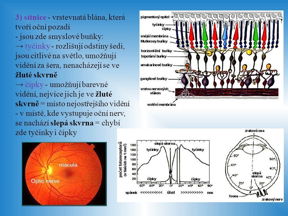 3) sítnice - vrstevnatá blána, která tvoří oční pozadí