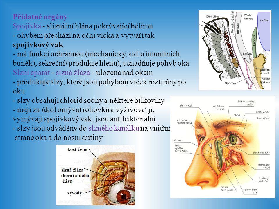 Přídatné orgány Spojivka - slizniční blána pokrývající bělimu. - ohybem přechází na oční víčka a vytváří tak spojivkový vak.