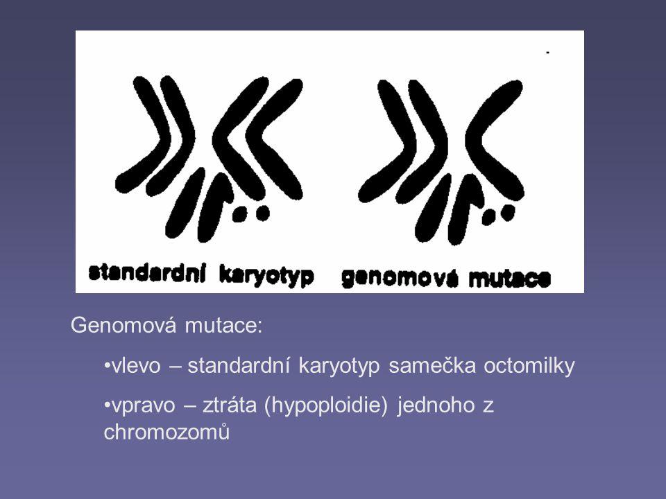 Genomová mutace: vlevo – standardní karyotyp samečka octomilky.