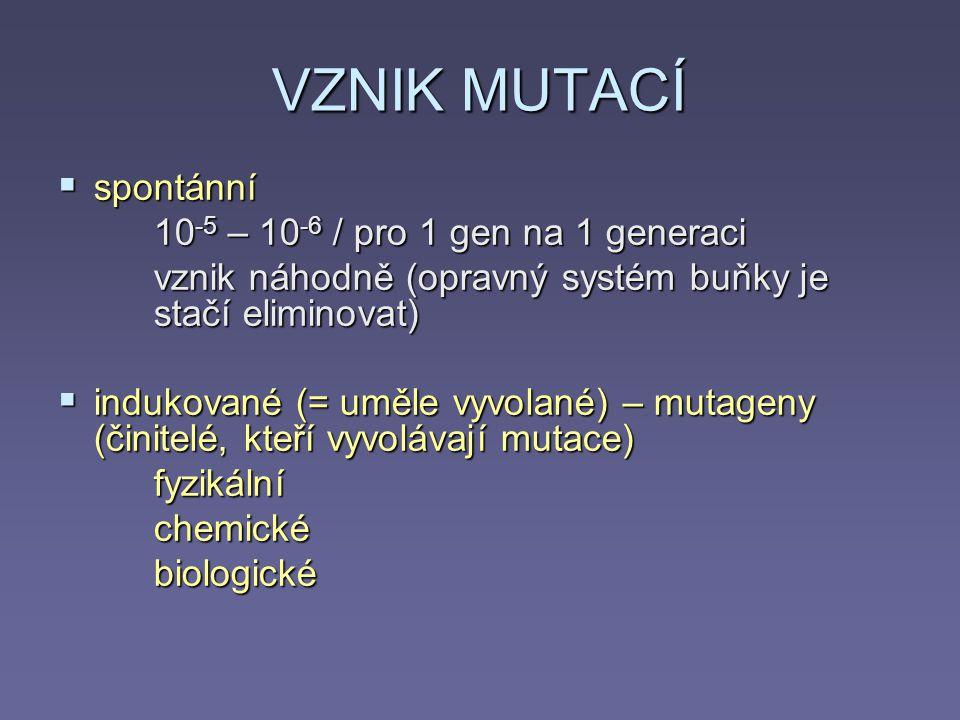 VZNIK MUTACÍ spontánní 10-5 – 10-6 / pro 1 gen na 1 generaci