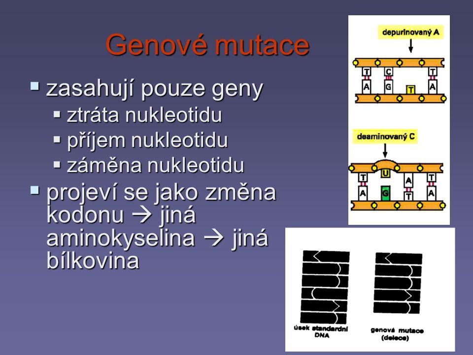 Genové mutace zasahují pouze geny