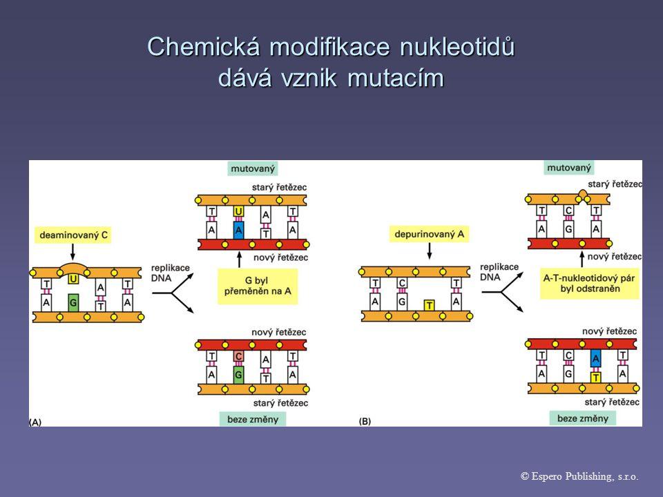 Chemická modifikace nukleotidů dává vznik mutacím