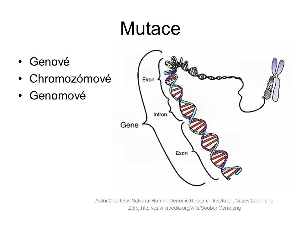 Mutace Genové Chromozómové Genomové