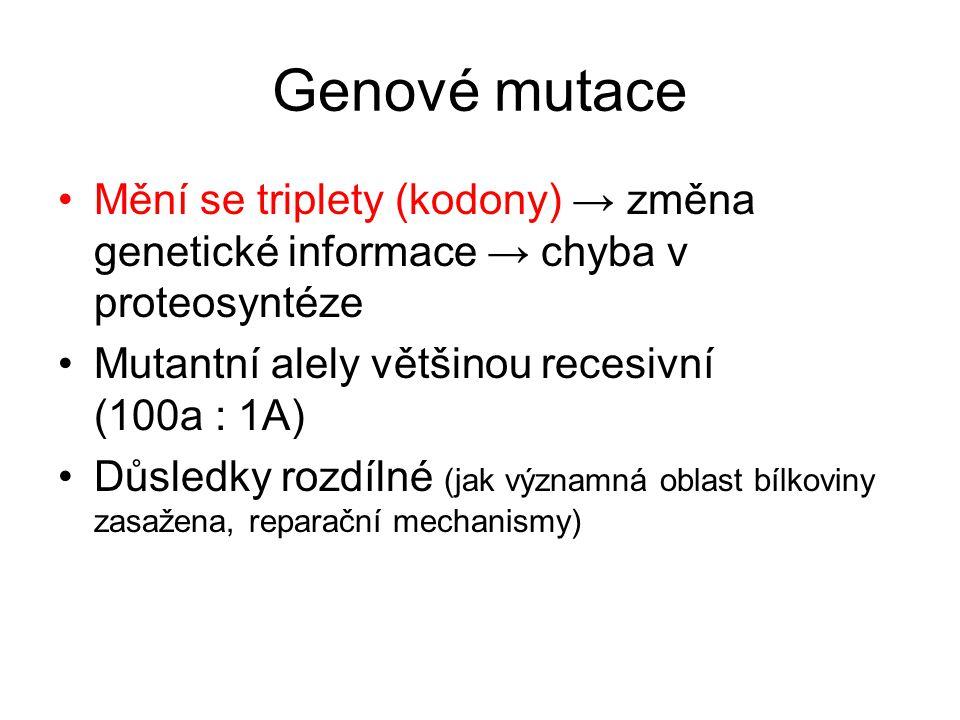 Genové mutace Mění se triplety (kodony) → změna genetické informace → chyba v proteosyntéze. Mutantní alely většinou recesivní (100a : 1A)