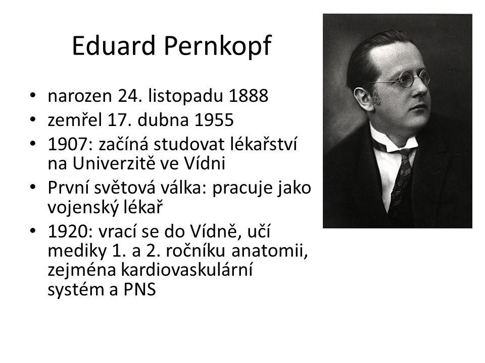 Eduard Pernkopf narozen 24. listopadu 1888 zemřel 17. dubna 1955