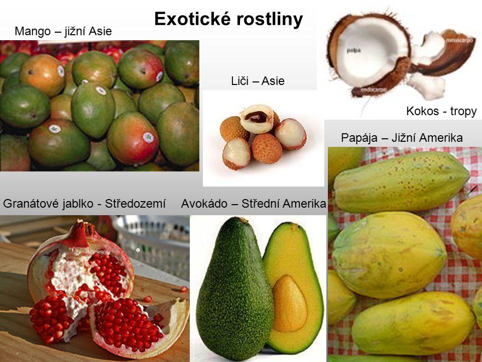 Exotické rostliny Mango – jižní Asie Liči – Asie Kokos - tropy