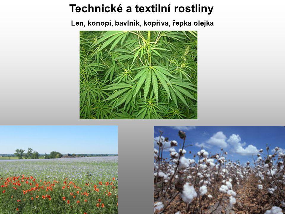 Technické a textilní rostliny