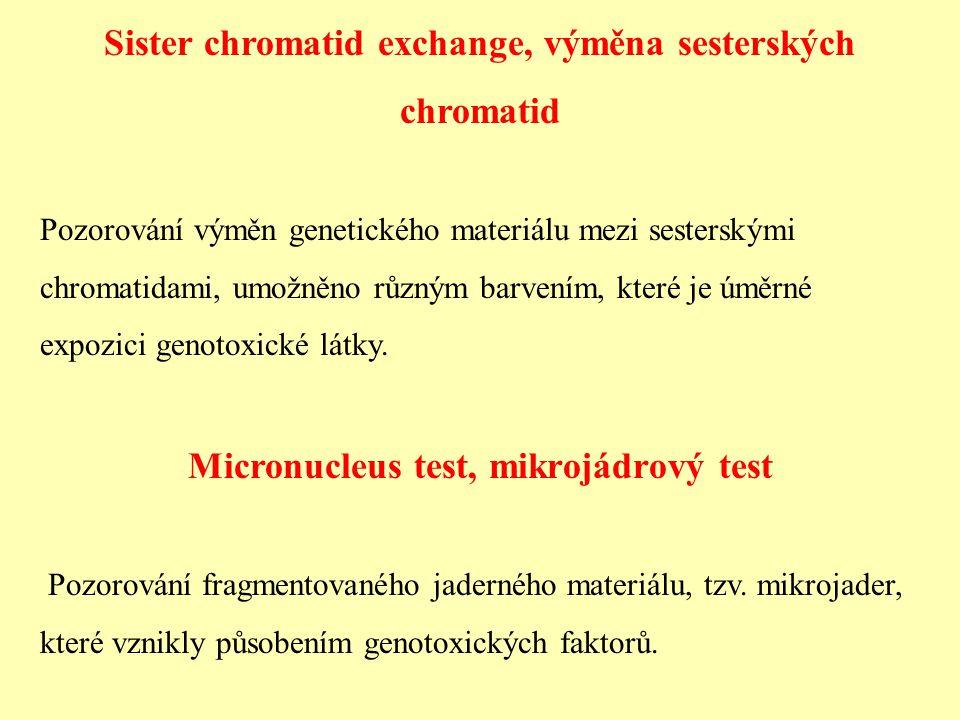 Sister chromatid exchange, výměna sesterských chromatid