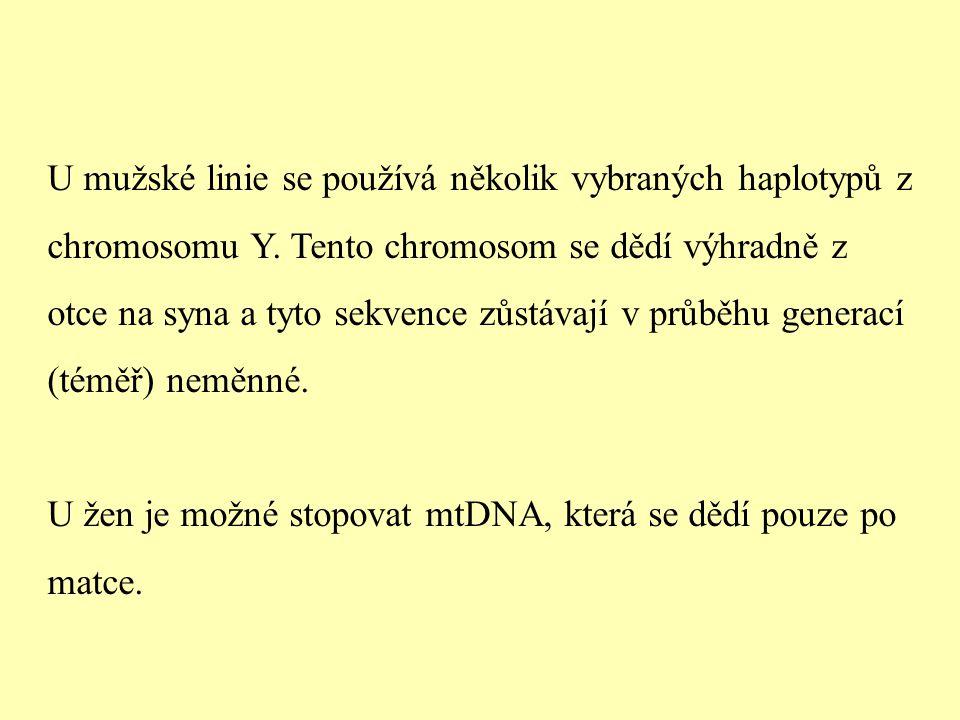 U mužské linie se používá několik vybraných haplotypů z chromosomu Y