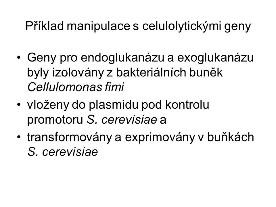 Příklad manipulace s celulolytickými geny
