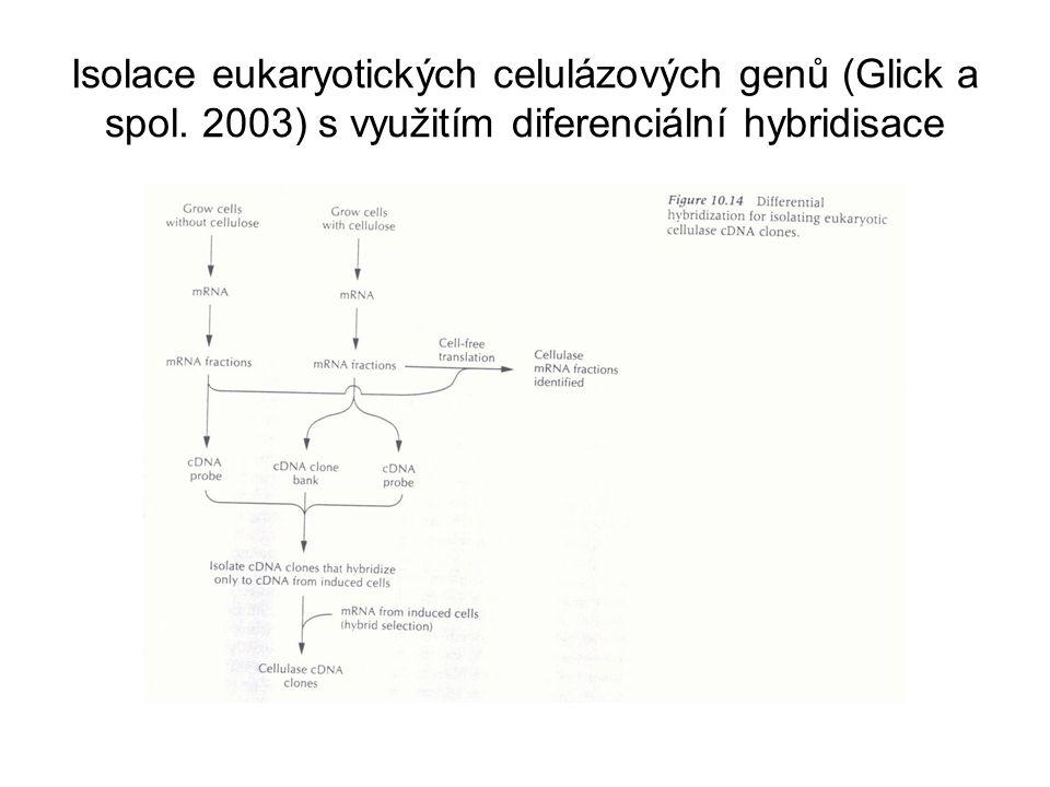 Isolace eukaryotických celulázových genů (Glick a spol