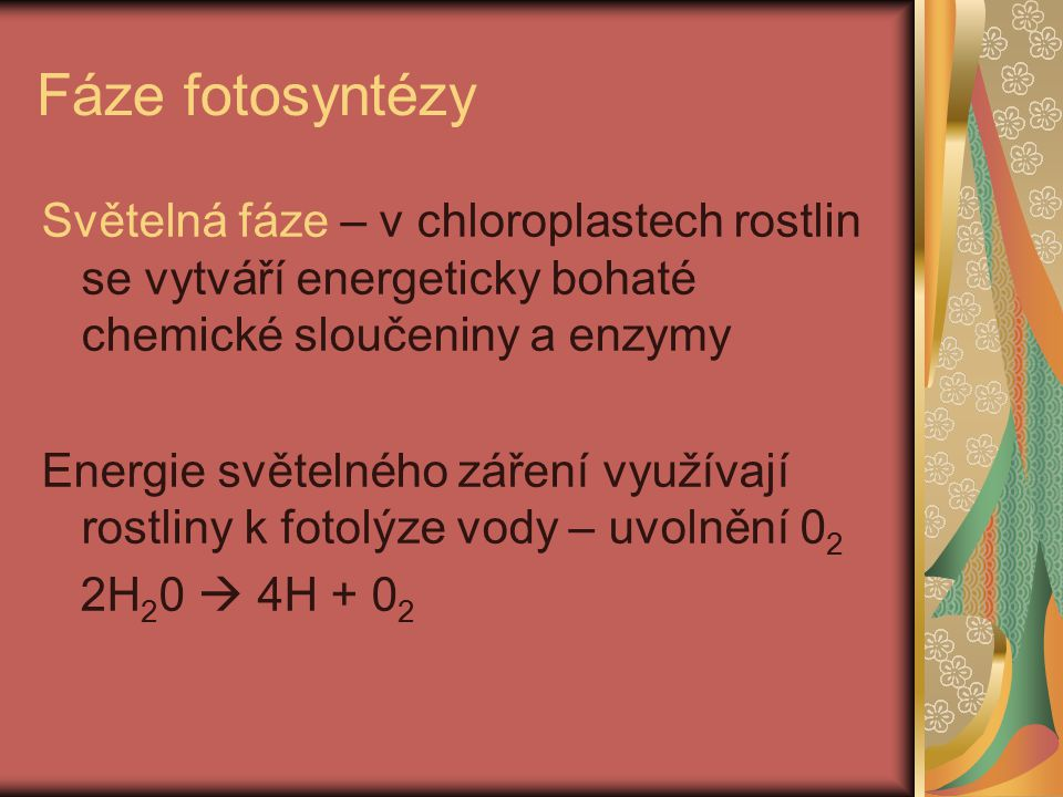 Fáze fotosyntézy Světelná fáze – v chloroplastech rostlin se vytváří energeticky bohaté chemické sloučeniny a enzymy.