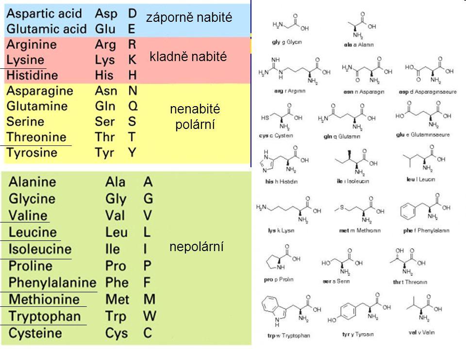 záporně nabité kladně nabité nenabité polární nepolární proteiny