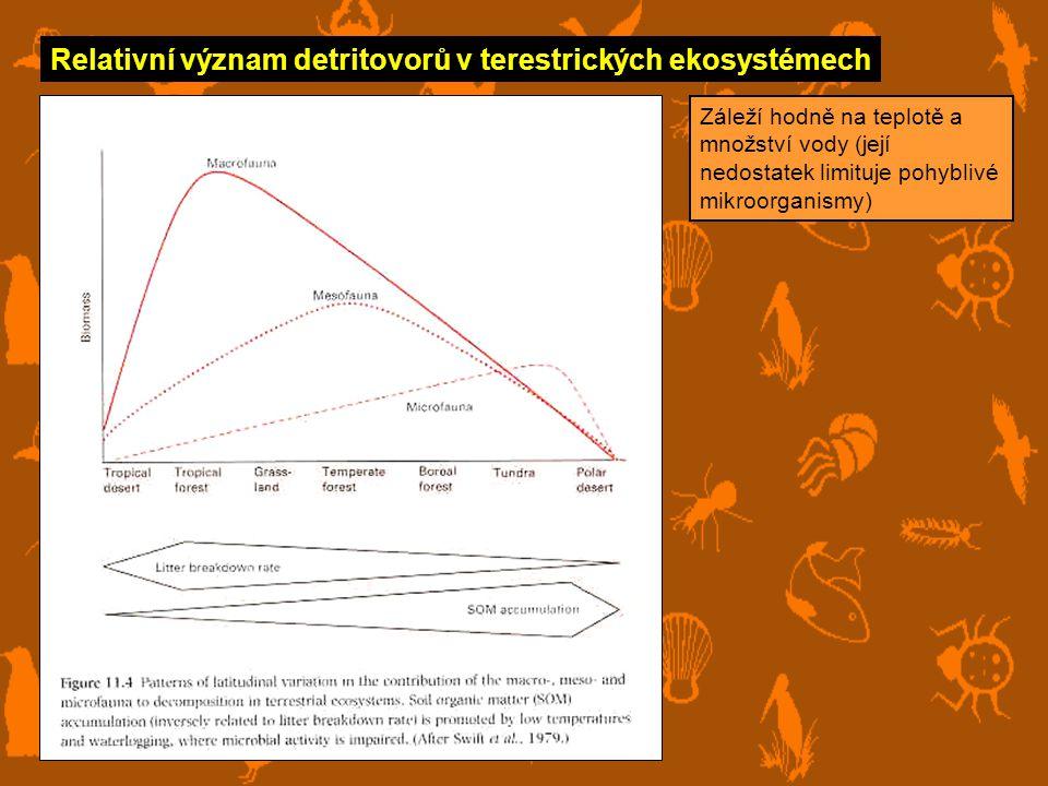 Relativní význam detritovorů v terestrických ekosystémech