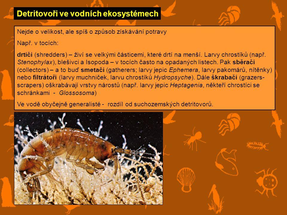 Detritovoři ve vodních ekosystémech