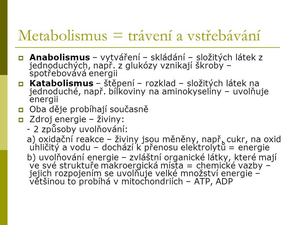 Metabolismus = trávení a vstřebávání