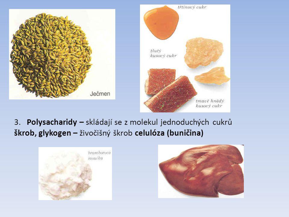 3. Polysacharidy – skládají se z molekul jednoduchých cukrů