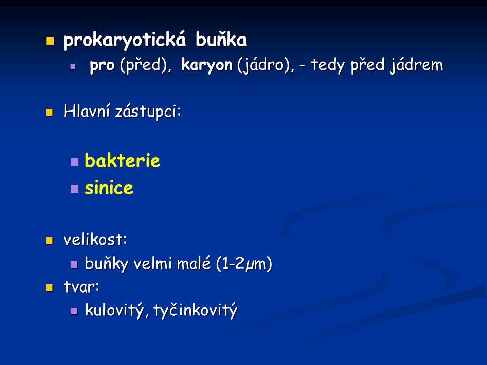 prokaryotická buňka bakterie sinice Hlavní zástupci: velikost: