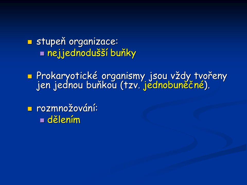 stupeň organizace: nejjednodušší buňky. Prokaryotické organismy jsou vždy tvořeny jen jednou buňkou (tzv. jednobuněčné).