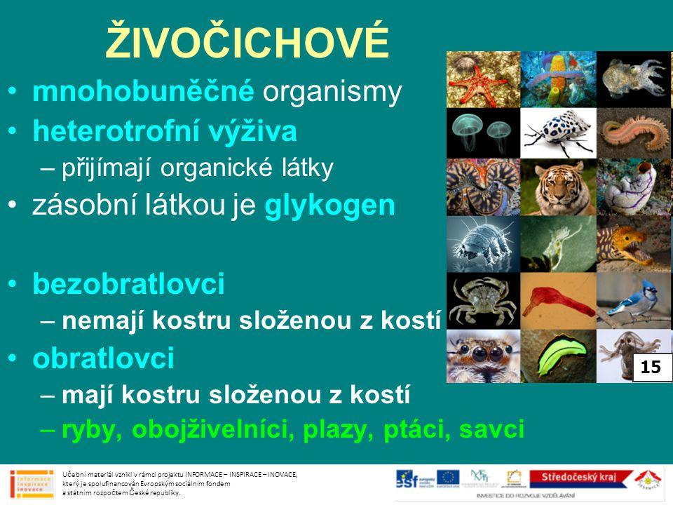 ŽIVOČICHOVÉ mnohobuněčné organismy heterotrofní výživa