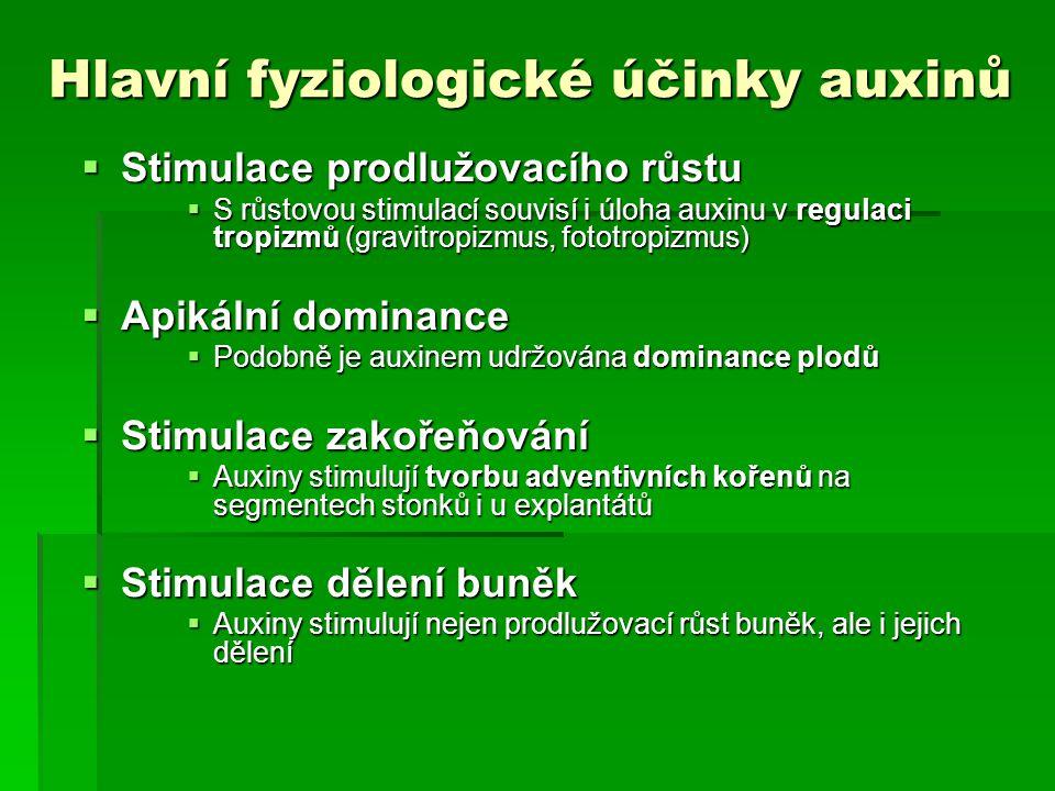 Hlavní fyziologické účinky auxinů