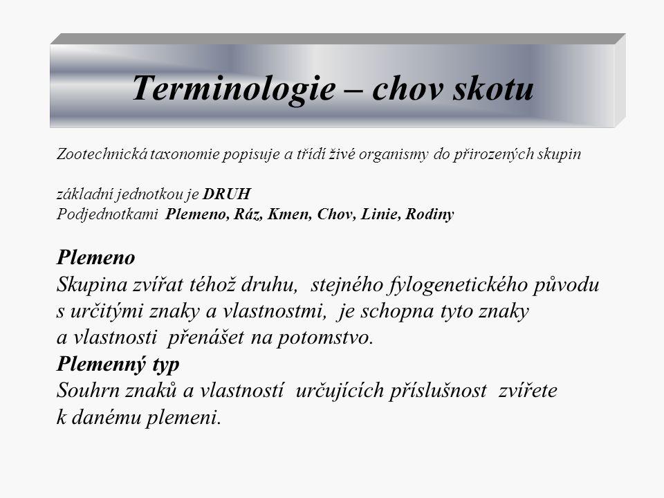 Terminologie – chov skotu