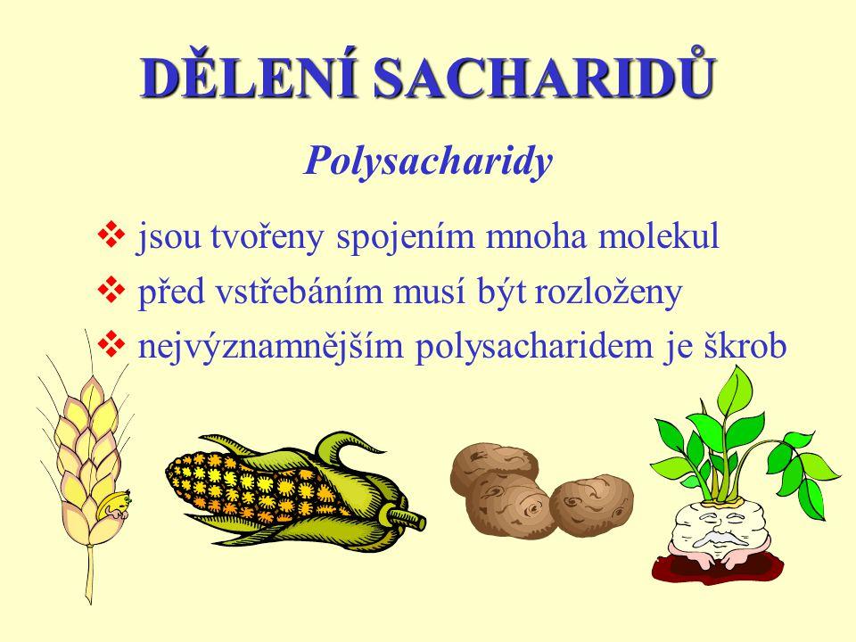 DĚLENÍ SACHARIDŮ Polysacharidy jsou tvořeny spojením mnoha molekul