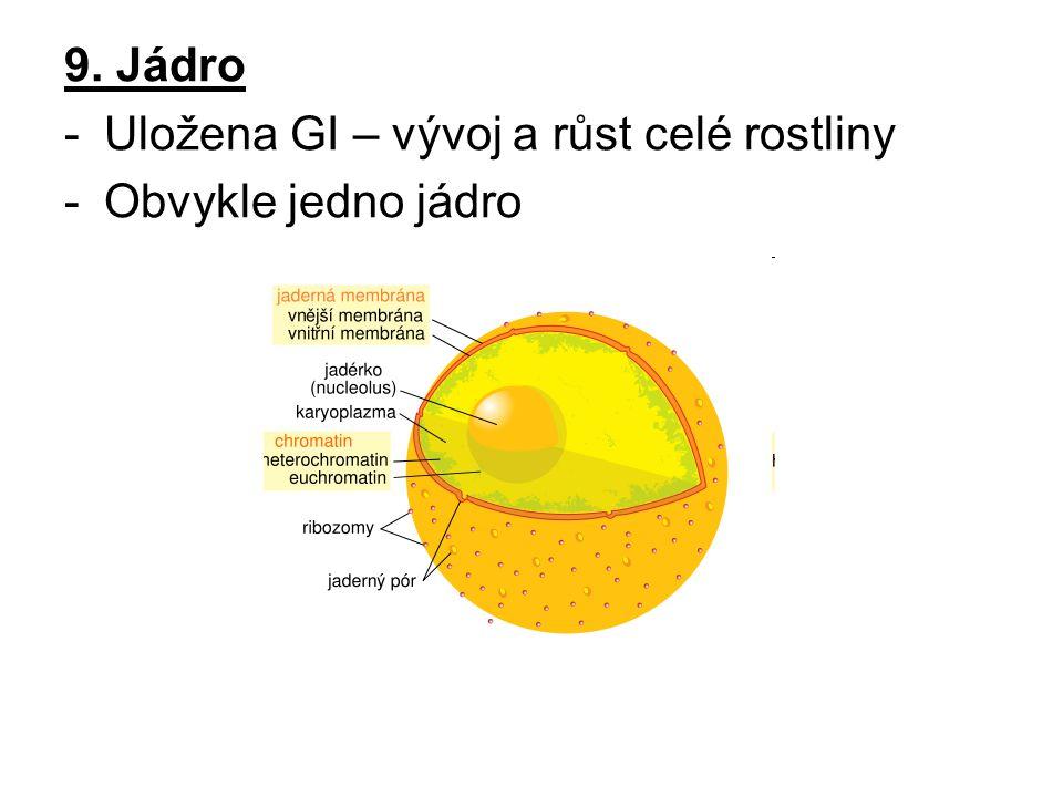 9. Jádro Uložena GI – vývoj a růst celé rostliny Obvykle jedno jádro