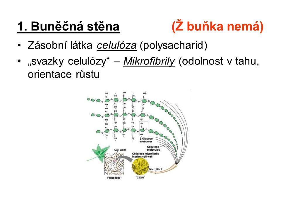 1. Buněčná stěna (Ž buňka nemá)