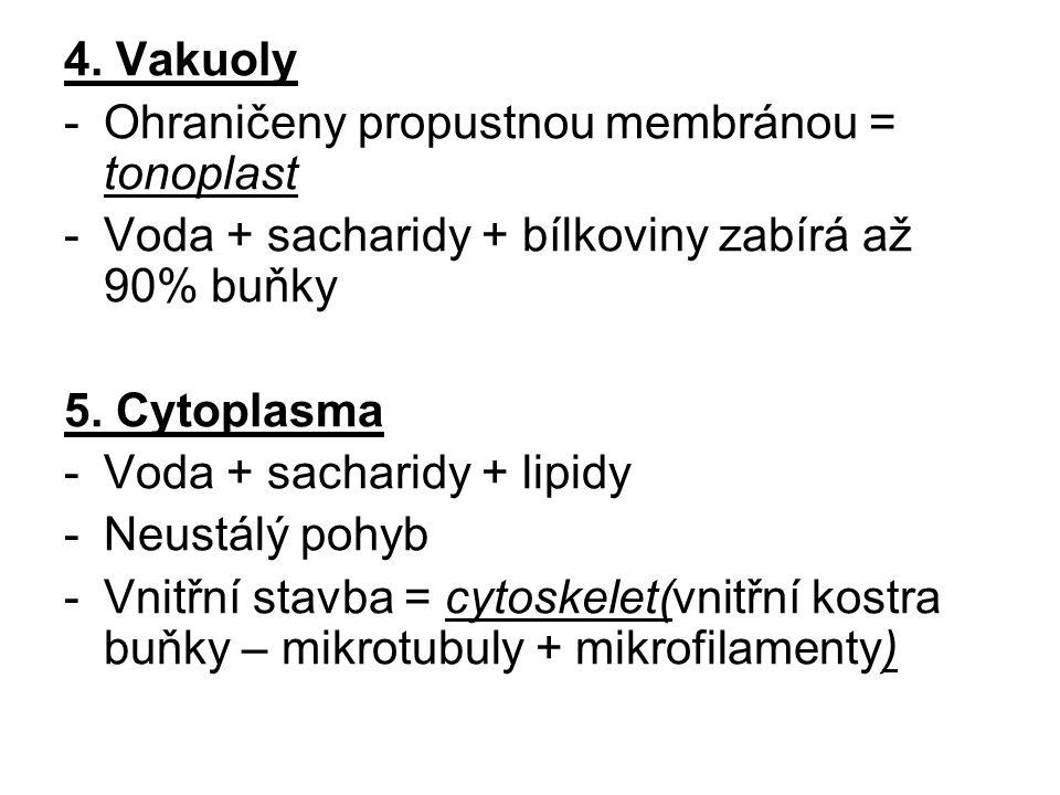 4. Vakuoly Ohraničeny propustnou membránou = tonoplast. Voda + sacharidy + bílkoviny zabírá až 90% buňky.