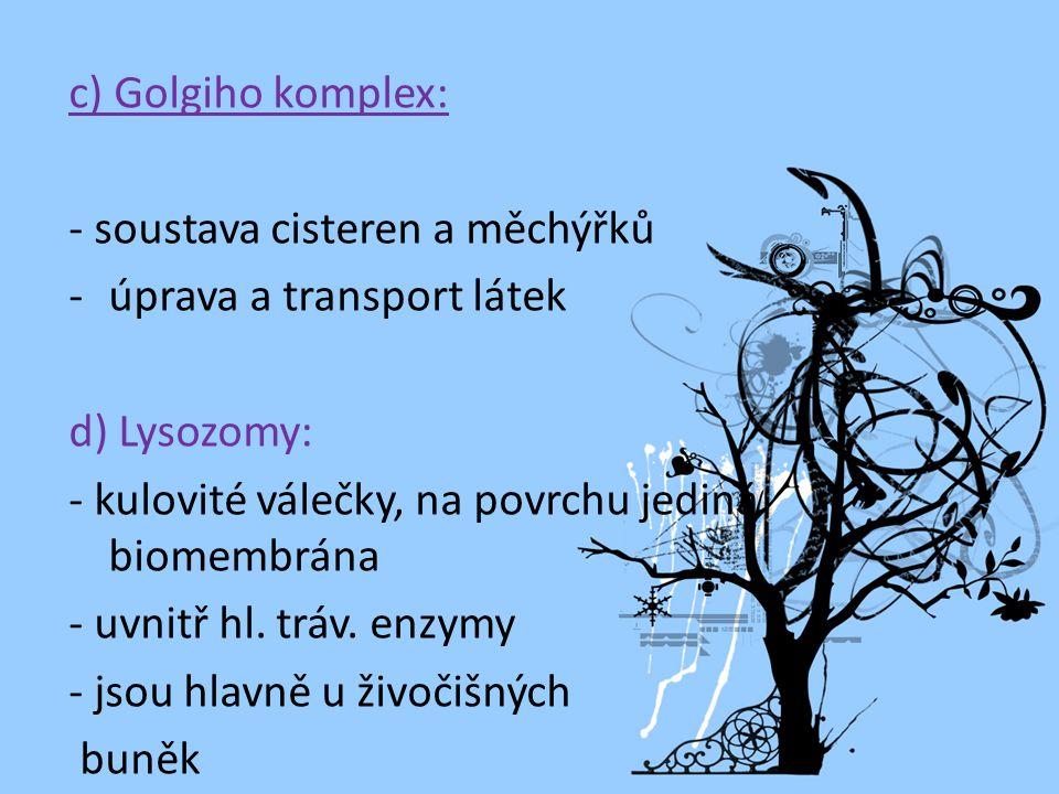 c) Golgiho komplex: - soustava cisteren a měchýřků. úprava a transport látek. d) Lysozomy: - kulovité válečky, na povrchu jediná biomembrána.
