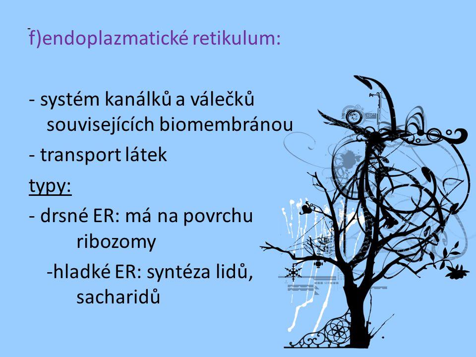 f)endoplazmatické retikulum: - systém kanálků a válečků souvisejících biomembránou - transport látek typy: - drsné ER: má na povrchu ribozomy -hladké ER: syntéza lidů, sacharidů