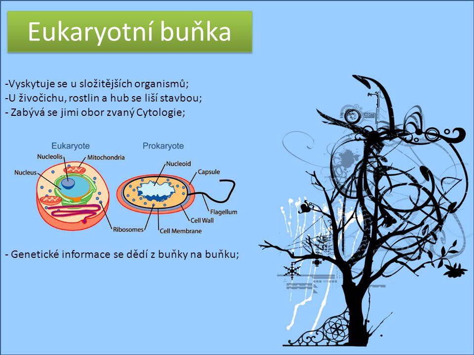 Eukaryotní buňka Vyskytuje se u složitějších organismů;