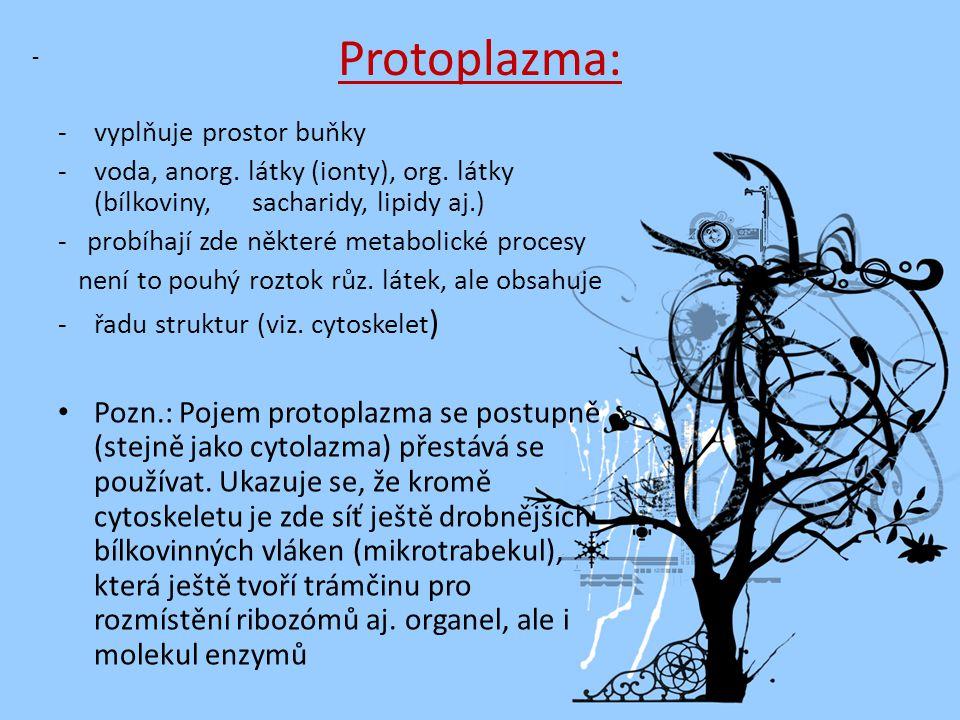 Protoplazma: vyplňuje prostor buňky. - voda, anorg. látky (ionty), org. látky (bílkoviny, sacharidy, lipidy aj.)