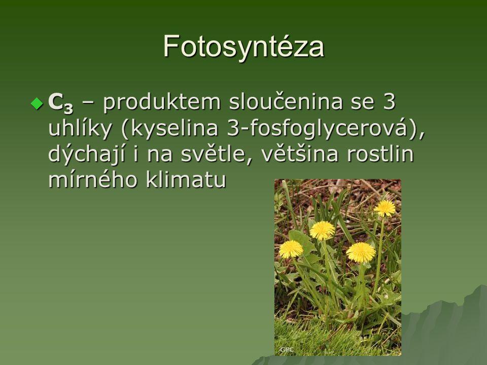 Fotosyntéza C3 – produktem sloučenina se 3 uhlíky (kyselina 3-fosfoglycerová), dýchají i na světle, většina rostlin mírného klimatu.