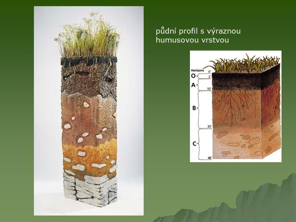 půdní profil s výraznou humusovou vrstvou