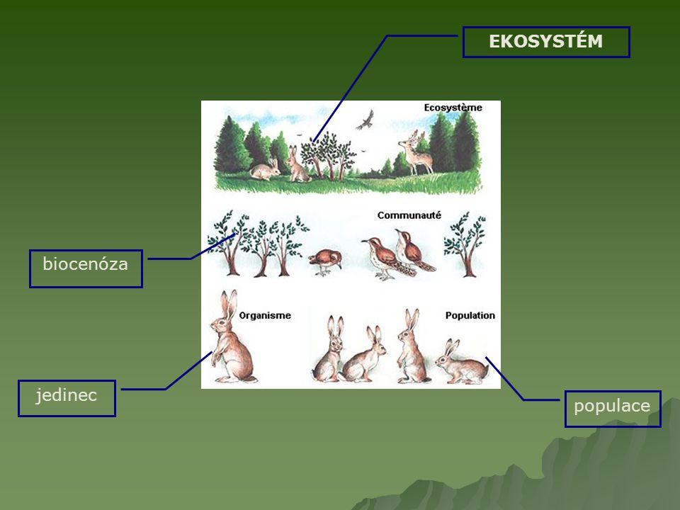 EKOSYSTÉM biocenóza jedinec populace