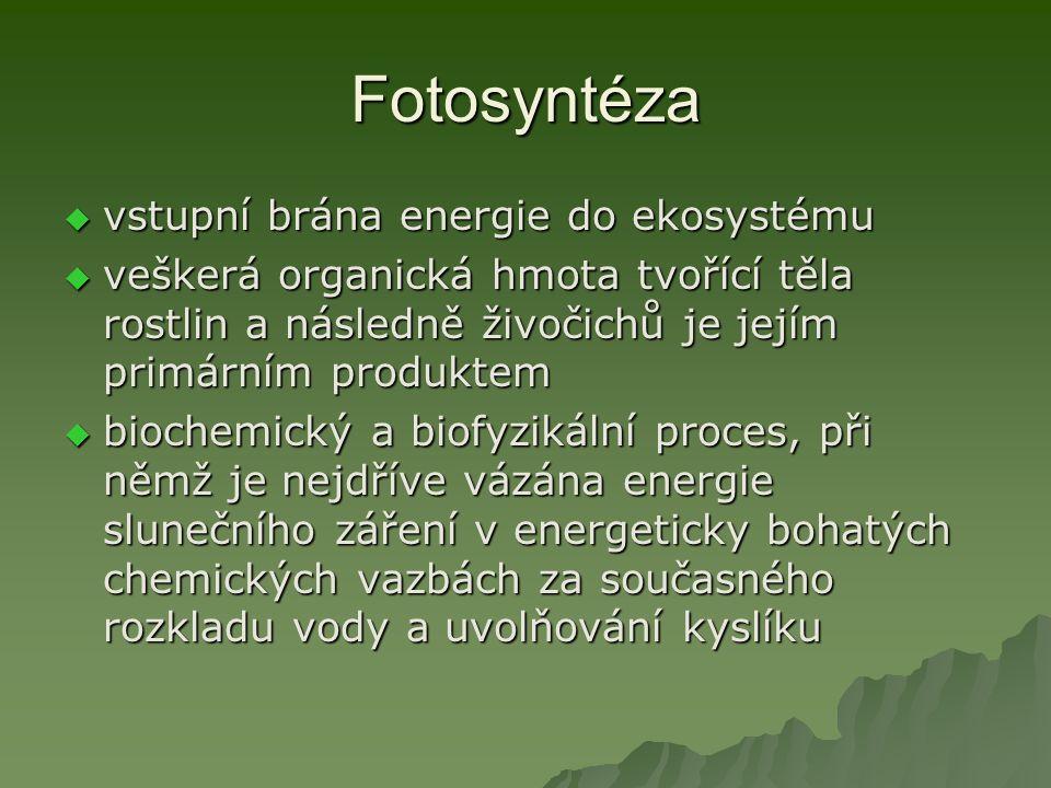 Fotosyntéza vstupní brána energie do ekosystému