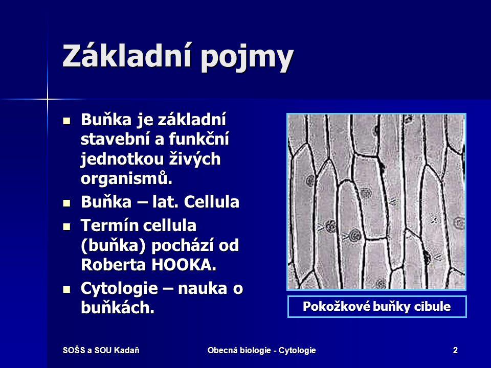 Pokožkové buňky cibule Obecná biologie - Cytologie