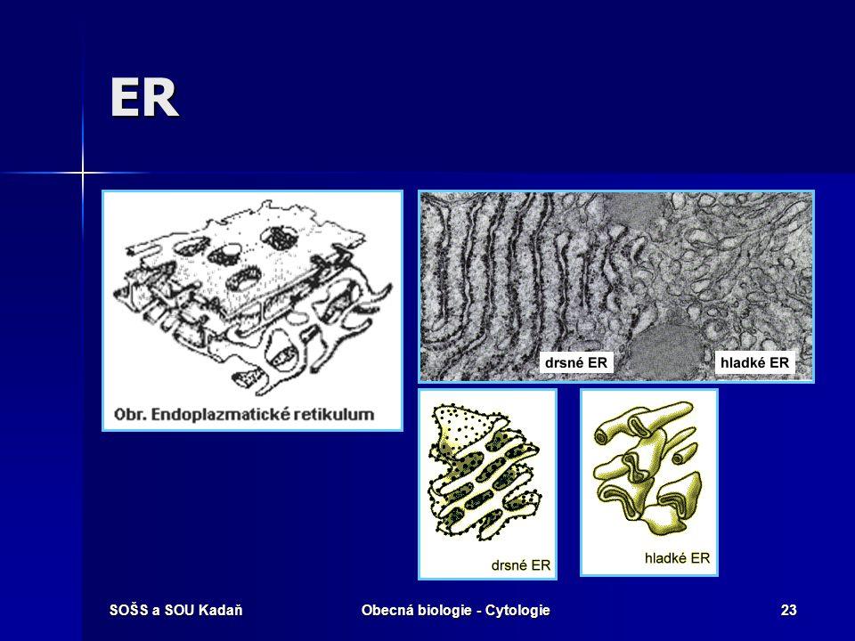 Obecná biologie - Cytologie